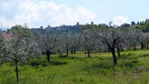 178-Montefalcone (1280x719)