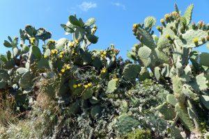 368bis-cactus (1280x855)